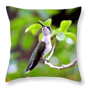 Img_1243-004 - Ruby-throated Hummingbird Throw Pillow