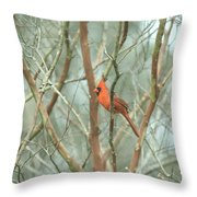 Img_1273-003 - Northern Cardinal Throw Pillow