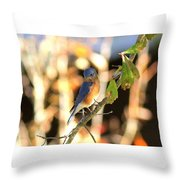 Img_145-005 - Eastern Bluebird Throw Pillow