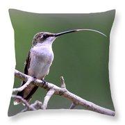 Img_1768-001 - Ruby-throated Hummingbird Throw Pillow