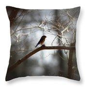 Img_2287 - Eastern Bluebird Throw Pillow