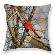 Img_2757-001 - Northern Cardinal Throw Pillow