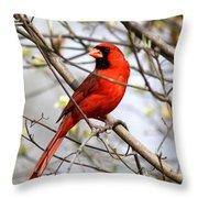 Img_2902-004 - Northern Cardinal Throw Pillow