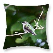 Img_3309 - Ruby-throated Hummingbird Throw Pillow