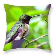 Img_3524-002 - Ruby-throated Hummingbird Throw Pillow