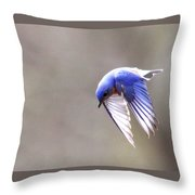 Img_4138-003 - Eastern Bluebird Throw Pillow