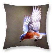 Img_4139-003 - Eastern Bluebird Throw Pillow
