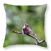 Img_5271-001 - Ruby-throated Hummingbird Throw Pillow