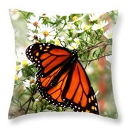 Img_5284-001 - Butterfly Throw Pillow