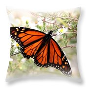 Img_5290-004 - Butterfly Throw Pillow