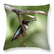 Img_5981-001 - Ruby-throated Hummingbird Throw Pillow