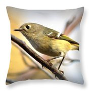 Img_5993 - Ruby-crowned Kinglet Throw Pillow