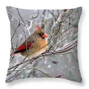 Img_6770 - Northern Cardinal Throw Pillow