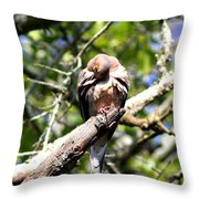Img_7276 - Mourning  Dove Throw Pillow