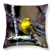 Img_8197-001 - Pine Warbler Throw Pillow