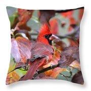 Img_ 8621 - Northern Cardinal Throw Pillow