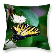 Img_8712-001 - Swallowtail Butterfly Throw Pillow