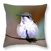 Img_8835 - Ruby-throated Hummingbird Throw Pillow