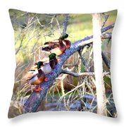 Img_8884-002 - Mallard Throw Pillow