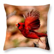 Img_8892 - Northern Cardinal Throw Pillow
