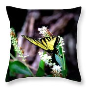 Img_8960 - Tiger Swallowtail Butterfly Throw Pillow