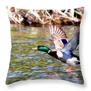 Img_8981-002 - Mallard Throw Pillow