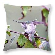 Img_9114-003 - Ruby-throated Hummingbird Throw Pillow