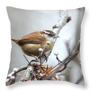Img_9256 - Carolina Wren Throw Pillow