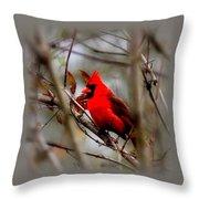 Img_9241 - Northern Cardinal Throw Pillow