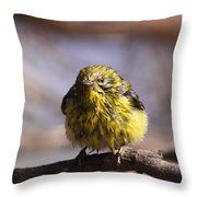 Img_9853 - Pine Warbler -  Very Wet Throw Pillow