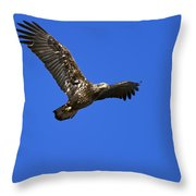 Immature Bald Eagle Fly By Throw Pillow