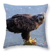 Immature Eagle Having Lunch Throw Pillow