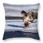 Immature Eagle On Ice Throw Pillow