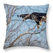 Immature Eagle Wheels Down Throw Pillow