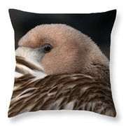 Immature Flamingo Throw Pillow