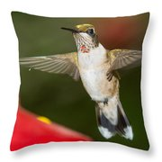 Immature Male Ruby-throated Hummer Throw Pillow