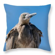 Immature Reddish Egret Throw Pillow