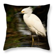 Immature Snowy Egret Throw Pillow
