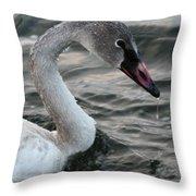 Immature Swan Throw Pillow
