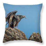 Immature Turkey Vulture 3 Throw Pillow