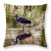 Immature White Ibis At Sunrise Throw Pillow