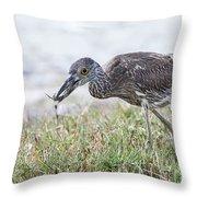 Immature Yellow Crown Night Heron Throw Pillow