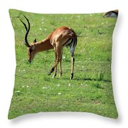 Impala Buck Throw Pillow