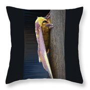 Imperial Moth Profile Throw Pillow