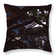In A Brazilian Forest Throw Pillow