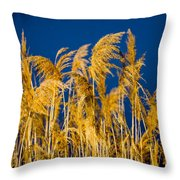 In And Out Of Focus Throw Pillow