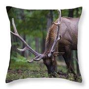 In Full Velvet Throw Pillow