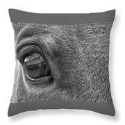 In Italian Cavallo View Throw Pillow