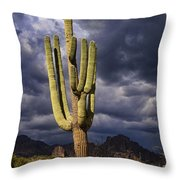 In Search Of That Perfect Saguaro  Throw Pillow