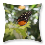 In The Butterfly Room At The Insectarium Throw Pillow